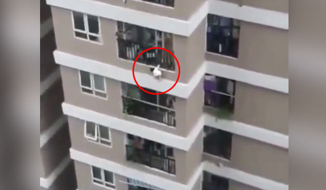 Driver catches toddler who fell from 12th storey (Watch)