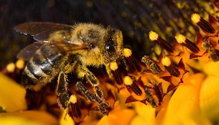 UK will no longer use bee-harming pesticide