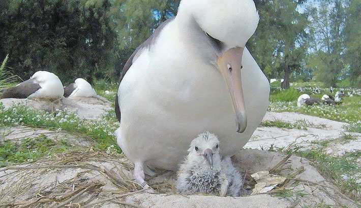 World's 'oldest wild bird' hatches new chick