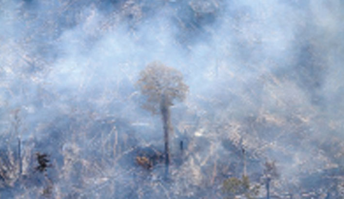 Two-thirds of tropical rainforest destroyed or degraded globally
