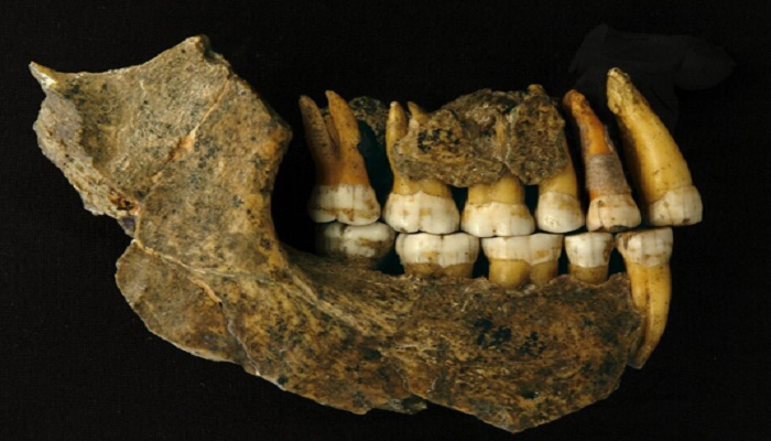 Neanderthals disappeared from Europe earlier than thought, says study