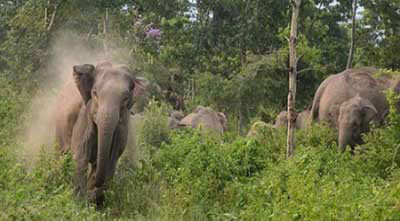Woman worker killed in elephant attack in Bandarban