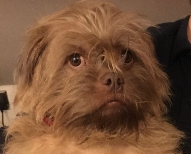 Dogs that 'talk' and have human-like features leave onlookers gobsmacked