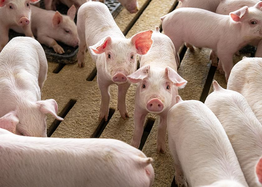 China reports African swine fever outbreak in Sichuan province