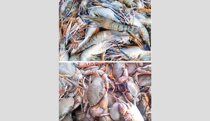 Shrimp, crab exports nosedive amid corona