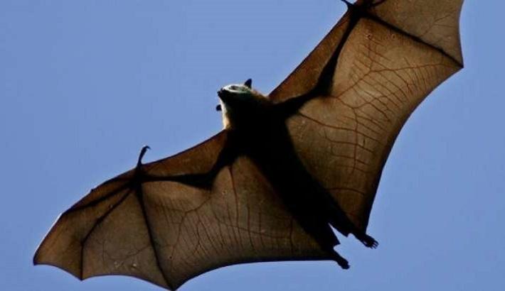 Research team locates 24 bat coronaviruses in southwestern China
