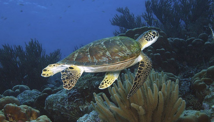 Protect our ocean 'to solve challenges of century'