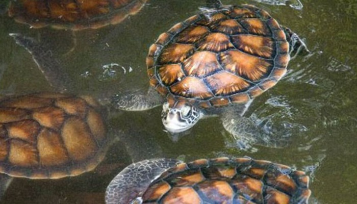 Nineteen die in Madagascar after eating turtle