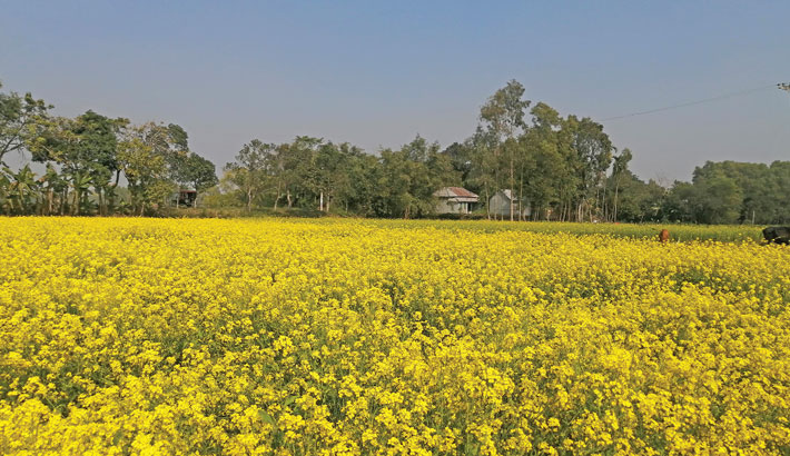 Mustard farming turns more profitable for high demand