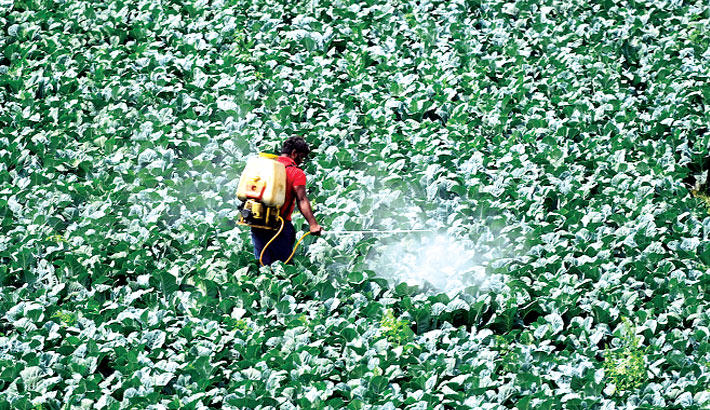 A third of global farmland at risk of pesticide pollution