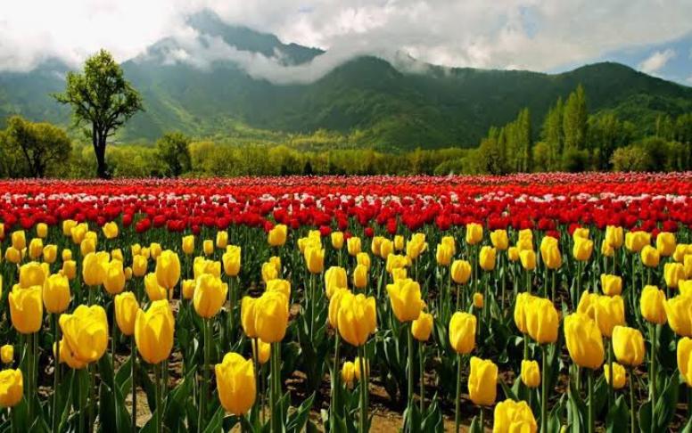 Jammu and Kashmir: Return of peace spurs revival of tourism