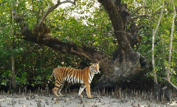 Tourists prohibited from entry to Sundarbans