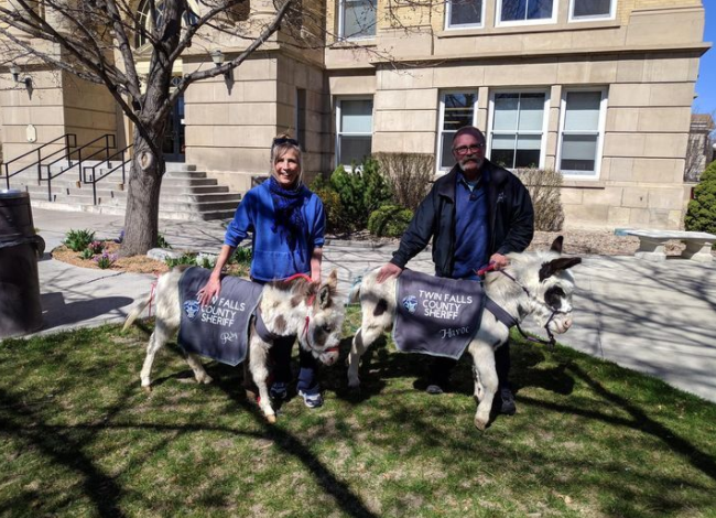 Nampa Police add donkeys and goat to drug-sniffing team