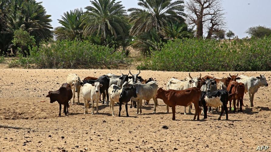 Tribal clashes in Sudan's Darfur kill 18: medics