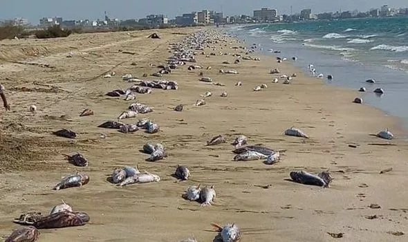Chilling footage shows thousands of dead fish - 'What China doesn't want you to know'