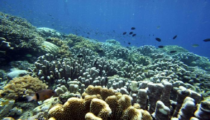 Climate change driving marine species poleward