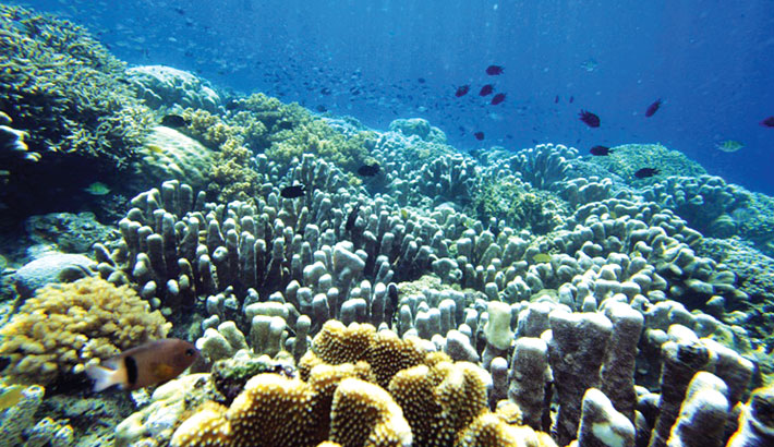 Climate change driving marine species towards poles