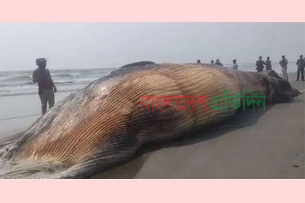 Dead whale washes ashore in Himchhari