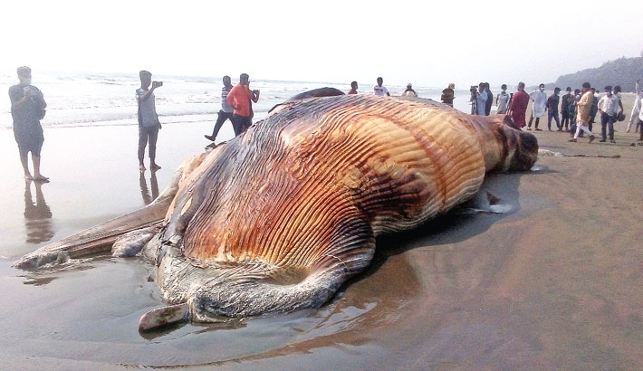 Whale carcass washed ashore in Cox's Bazar