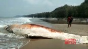 Another whale carcass washes ashore on Cox's Bazar beach