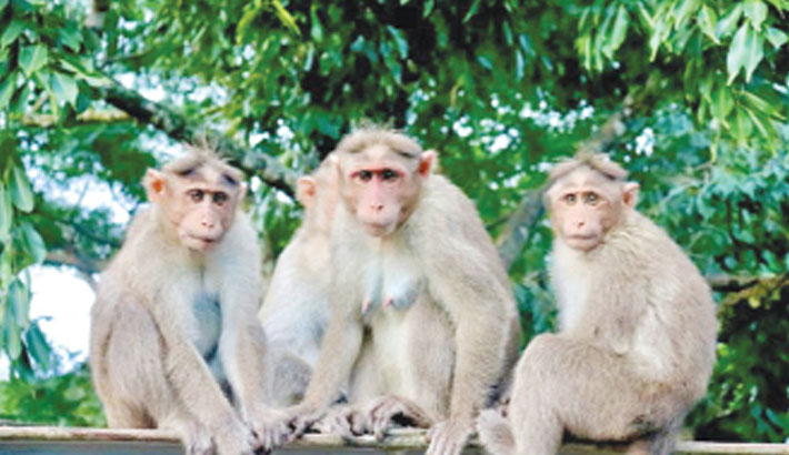 Men who used monkeys to steal cash arrested