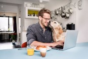 Turn your dog into the perfect work companion