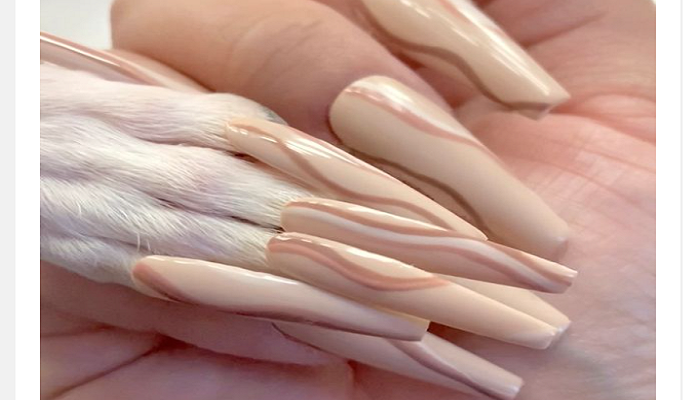 Woman loves to pamper her dog with fake nails - but some say it's 'animal abuse'