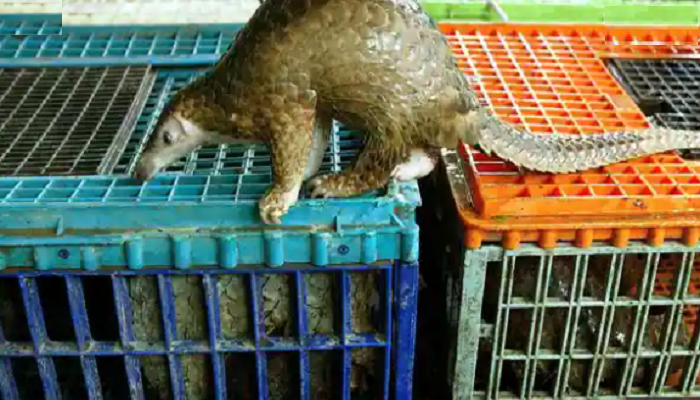 WHO urges ban on sale of live wild mammals in food markets