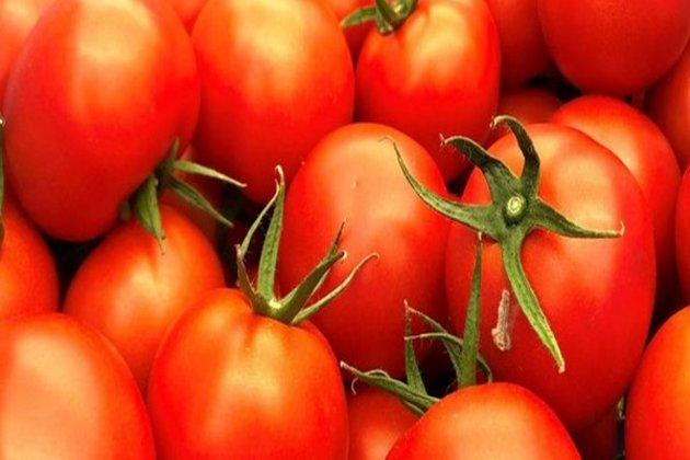 Japan's ketchup king halts Xinjiang tomato imports
