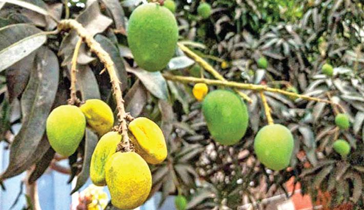 Scorching heat affects life in Rajshahi