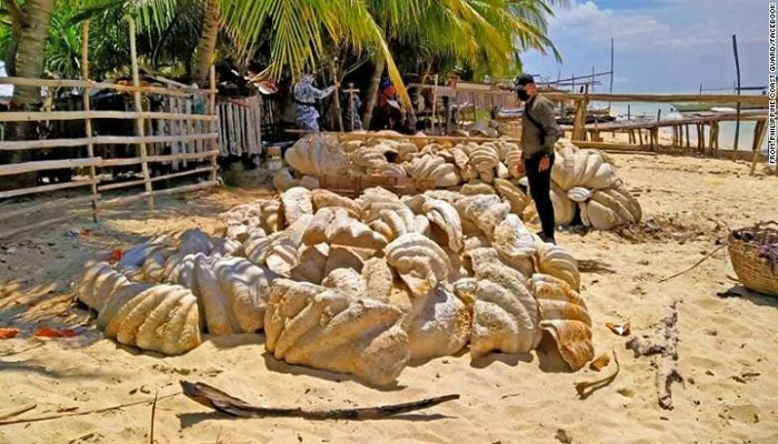 Philippine authorities seize fossilized giant clam shells worth $25 million