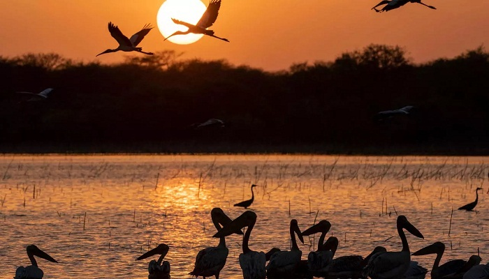 Rangers battle human encroachment in Sudan's biggest park