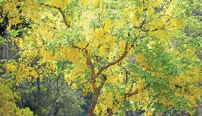 The nature is now in full bloom with trees displaying bold bright flowers