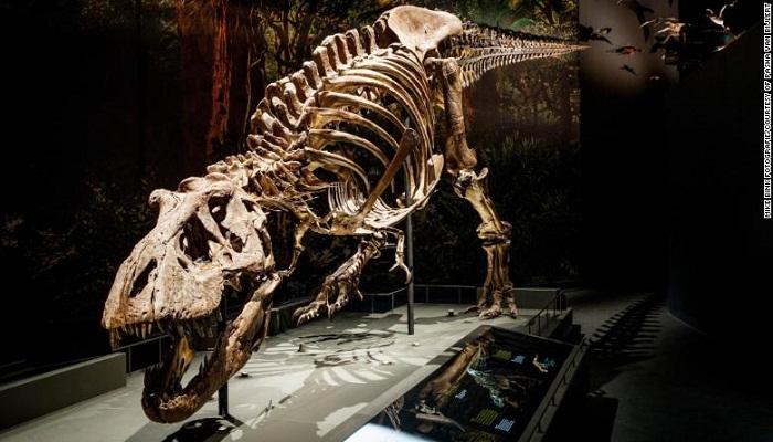 Tyrannosaurus rex walked surprisingly slowly, new study finds