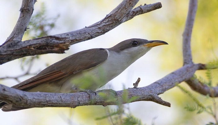 US sets aside habitat critical for survival of rare songbird