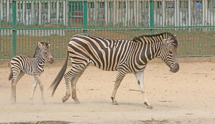 Inmates passing good time amid zoo closure