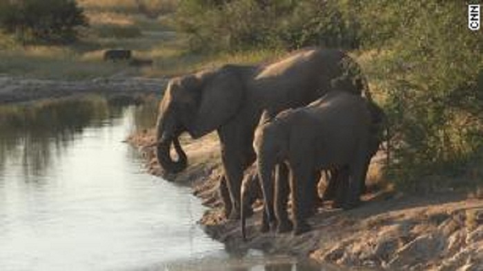 Zimbabwe to sell hunting rights for endangered elephants