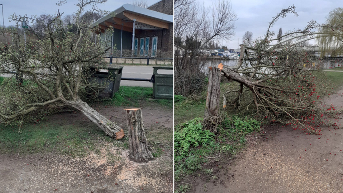Terror in England as dozens of much-loved trees are felled in the dead of night