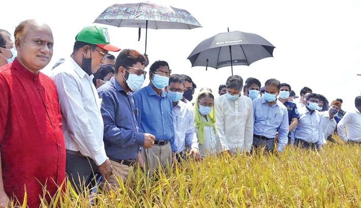 Govt plans early harvesting of paddy in haor