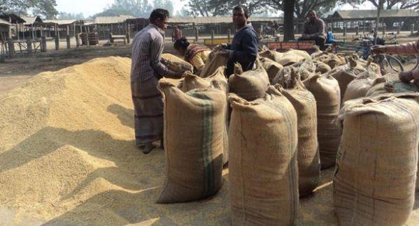 Govt to buy 11.50 lakh mts Boro rice