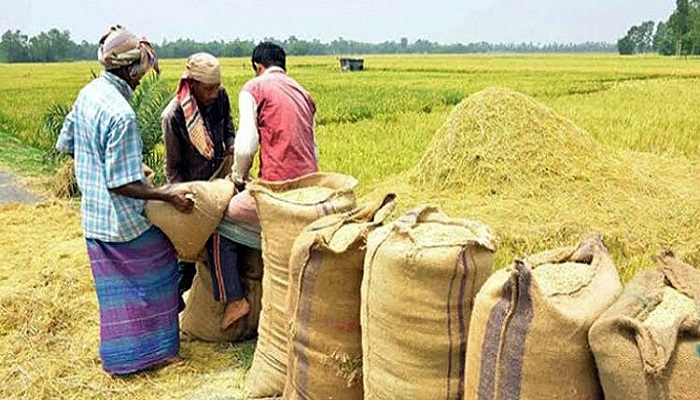 Countrywide Boro paddy procurement begins