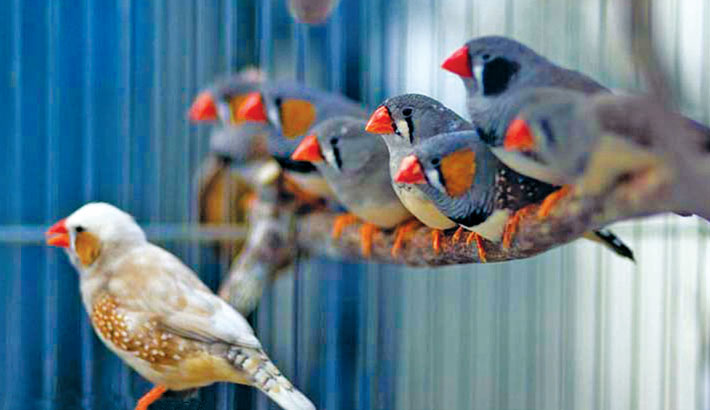 Man tries to smuggle 35 finches for singing contests