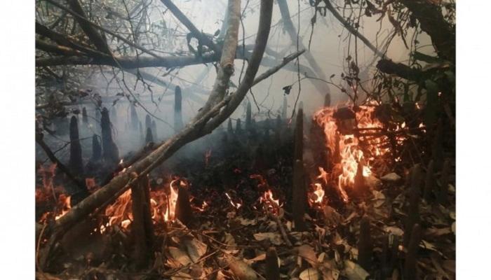 Sundarbans fire finally under control; probe body formed