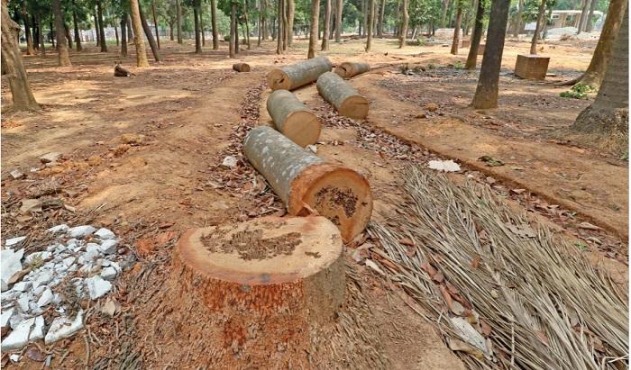 Historic Suhrawardy Udyan being destroyed