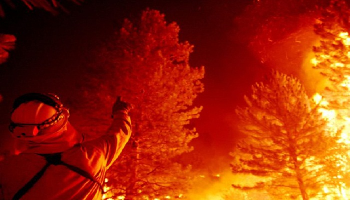 California sequoia still smoldering after 2020 fires