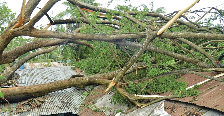 Couple dies as tree fall on their home in Nilphamari