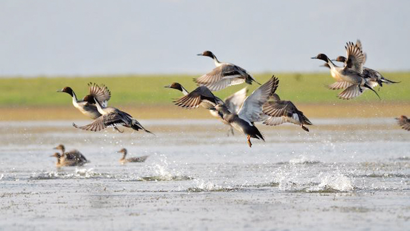 Environment Minister seeks cooperation from all in protecting  migratory birds-551722