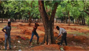 No tree to be felled unnecessarily at Suhrawardy Udyan: Project Director