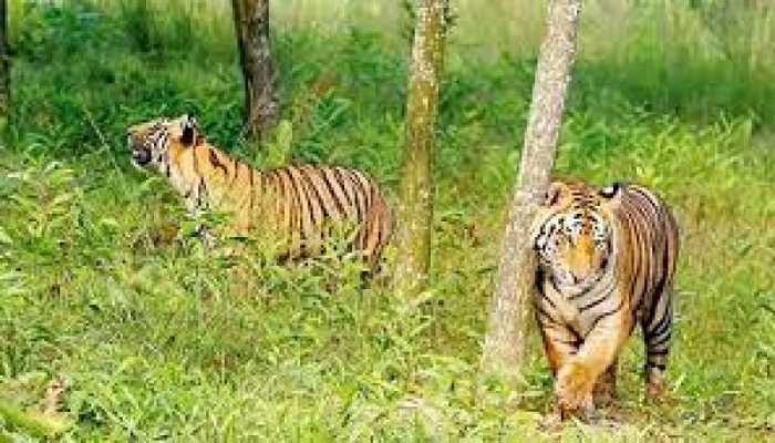 Forest guards to intensify patrolling in Sundarbans during Eid holidays