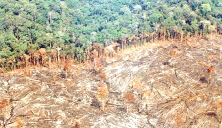 Amazon deforestation rises again